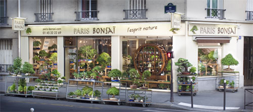 bonsai-paris-bonsai-magasin_1